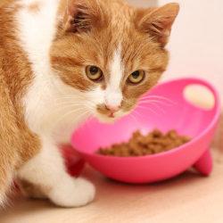 10 лучших кормов для стерилизованных кошек и кастрированных котов