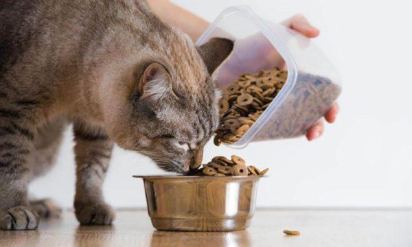 Кормление кота