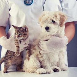 10 средств от глистов для собак и кошек