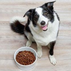 10 лучших кормов для собак