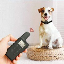 10 лучших электронных ошейников для собак