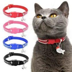 10 лучших ошейников для кошек