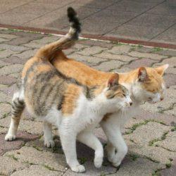 10 лучших средств для кошек от гуляния